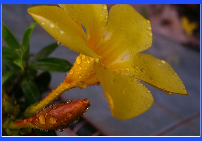 """фото """"цветок*"""" метки: макро и крупный план, природа, цветы"""