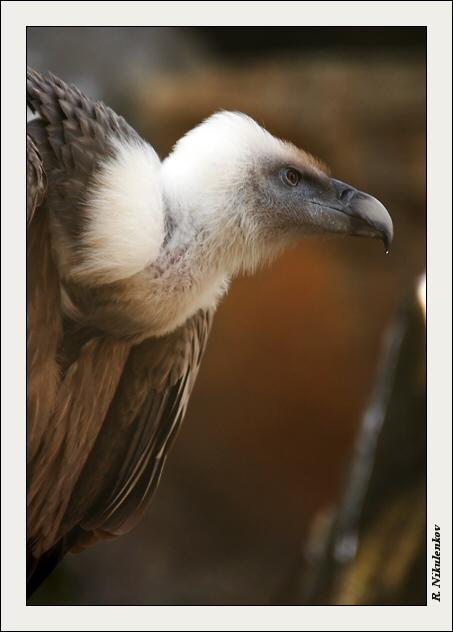 """фото """"Гордый птиц"""" метки: природа, дикие животные"""
