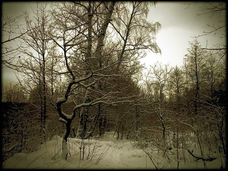 """фото """"Вечерний лес"""" метки: пейзаж, зима, лес"""