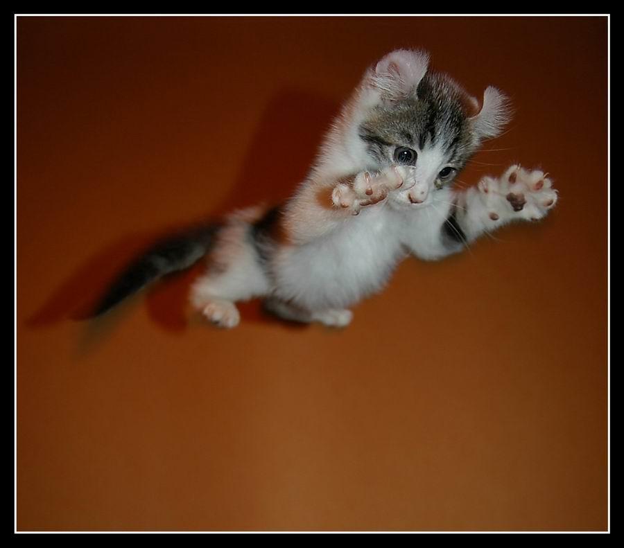 очень пушистый котик прыгает касается индексации