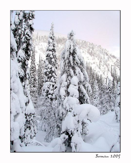 """фото """"Белый снег."""" метки: пейзаж, зима, лес"""