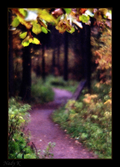 """фото """"Дорожка в сон...Осенний... Ушедший... Последний..."""" метки: пейзаж, осень"""