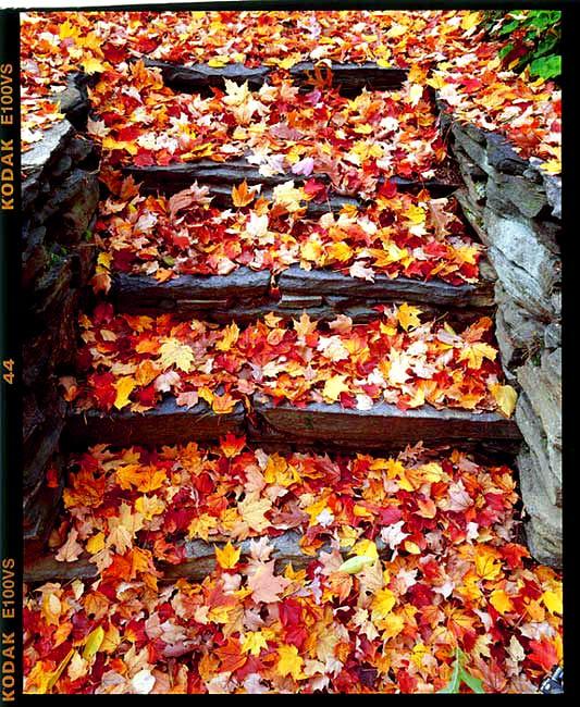 """фото """"steps"""" метки: пейзаж, архитектура, осень"""