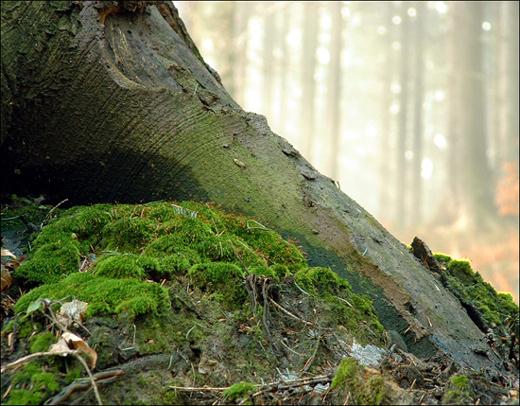 """фото """"...under..."""" метки: пейзаж, природа, лес, цветы"""