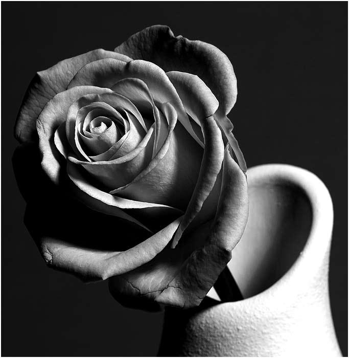 "фото ""old rose"" метки: черно-белые, натюрморт,"