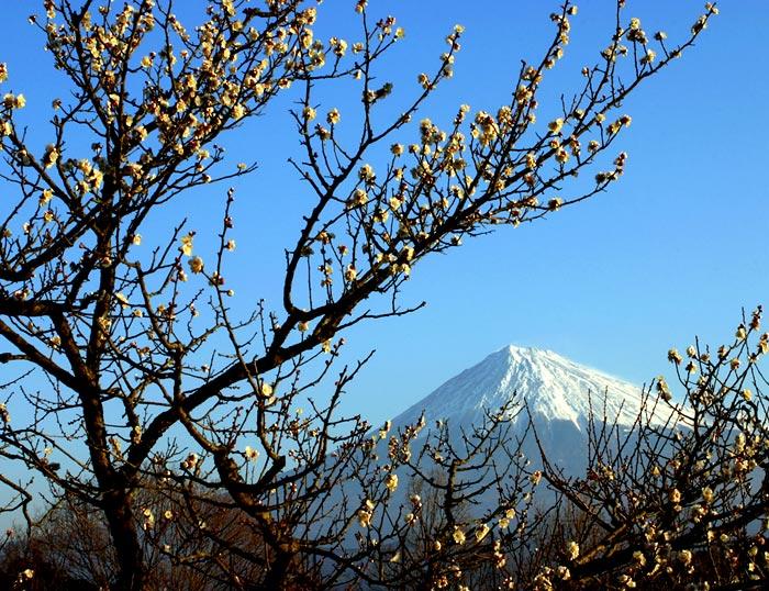 """фото """"Plum Blossoms II"""" метки: природа, пейзаж, горы, цветы"""
