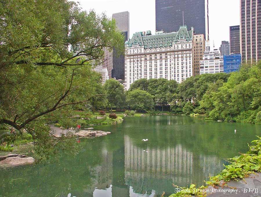 "фото ""Central Park. A New York Summer Day !"" метки: пейзаж, путешествия, Северная Америка, лето"