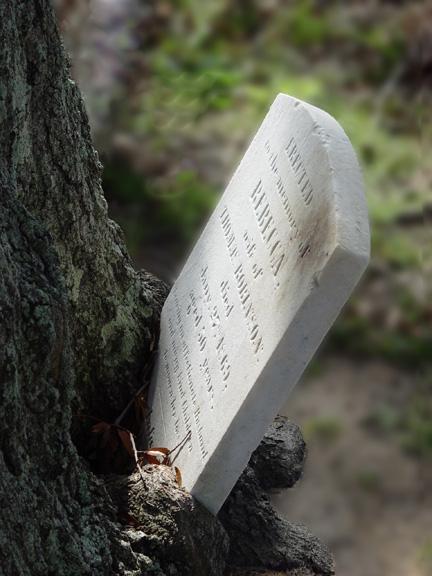 """фото """"Rebecca Always Did Like to Climb Trees"""" метки: натюрморт, фотомонтаж,"""