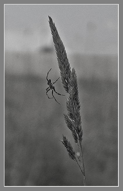 """фото """"Невесомость"""" метки: природа, насекомое"""