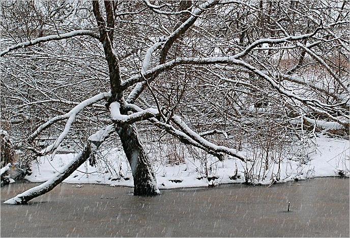 """фото """"Зимний этюд."""" метки: пейзаж, природа, зима"""