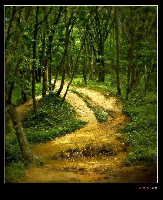 """фото """"...On unknown paths"""" метки: природа, пейзаж, лес"""