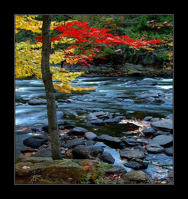 "фото ""AUTUMN PALETTE"" метки: пейзаж, путешествия, Северная Америка, осень"