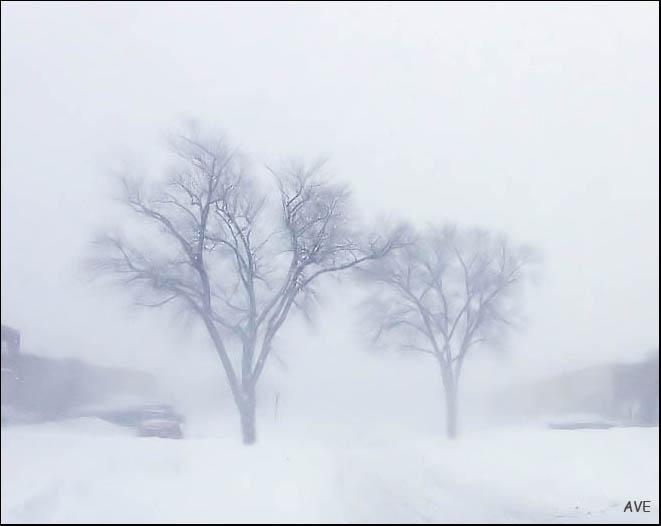 """фото """"Метель"""" метки: пейзаж, зима"""