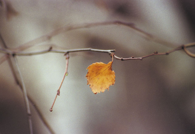 """фото """"Грусть..."""" метки: природа, цветы"""