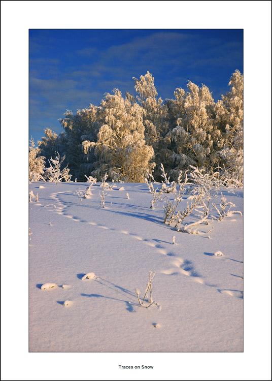 """фото """"Следы на Снегу"""" метки: разное, пейзаж, зима"""