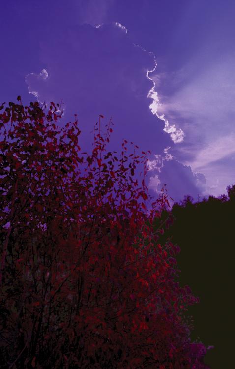 """фото """"Сон"""" метки: природа,"""