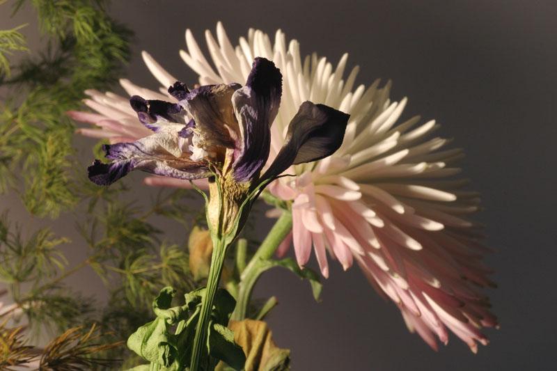 """фото """"Two flowers"""" метки: натюрморт,"""