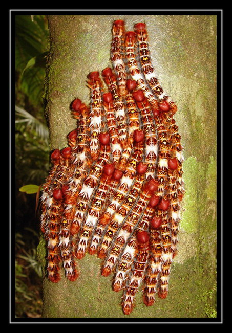 """фото """"Colorful worms"""" метки: путешествия, природа, Южная Америка, насекомое"""