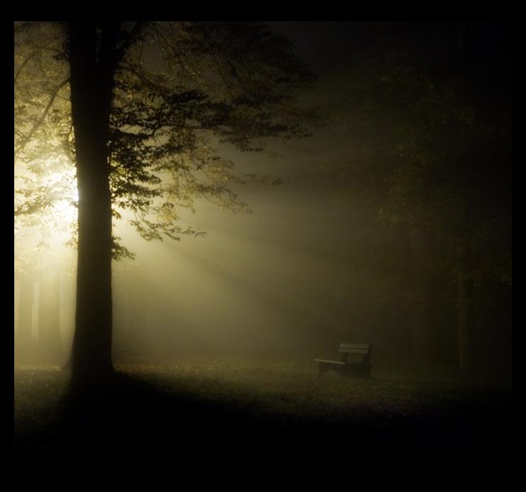 """фото """"ripper"""" метки: пейзаж, лес, ночь"""