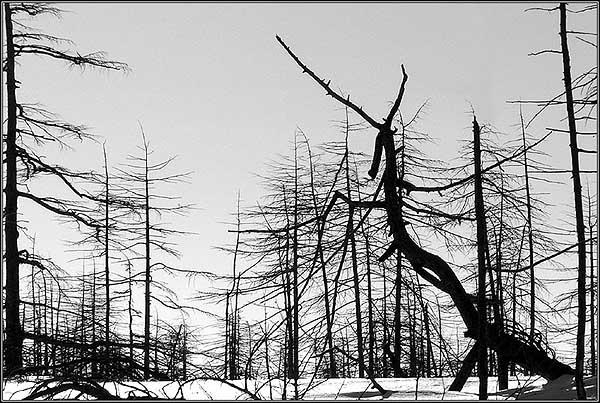 """фото """"Wood Dragon"""" метки: природа, пейзаж, лес"""