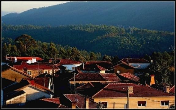 """фото """"Roofs"""" метки: пейзаж, лес, лето"""