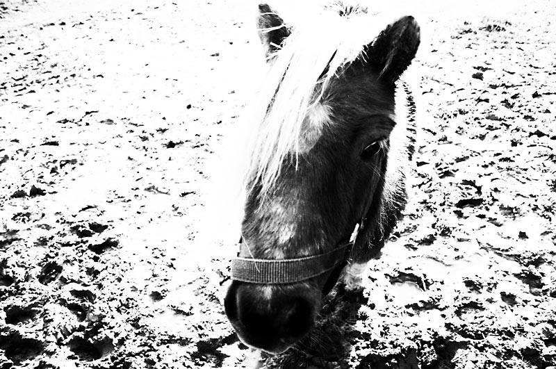 """фото """"Моя концептуальная лошадь"""" метки: жанр, черно-белые,"""