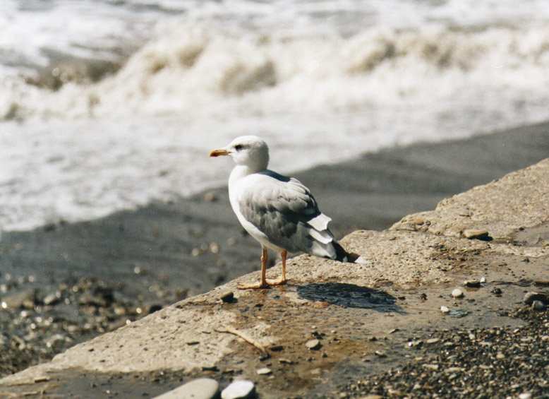 """фото """"ждем-с у моря погоды..)"""" метки: разное,"""