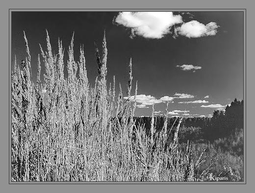 """фото """"пейзаж с травой и облаком"""" метки: пейзаж, черно-белые,"""