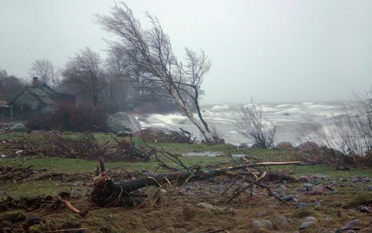 """фото """"Январский шторм. Древоповал"""" метки: пейзаж, вода"""
