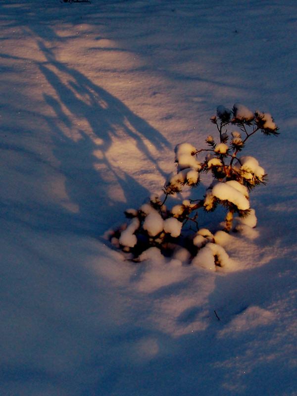 """фото """"на рассвете-3"""" метки: пейзаж, закат, зима"""