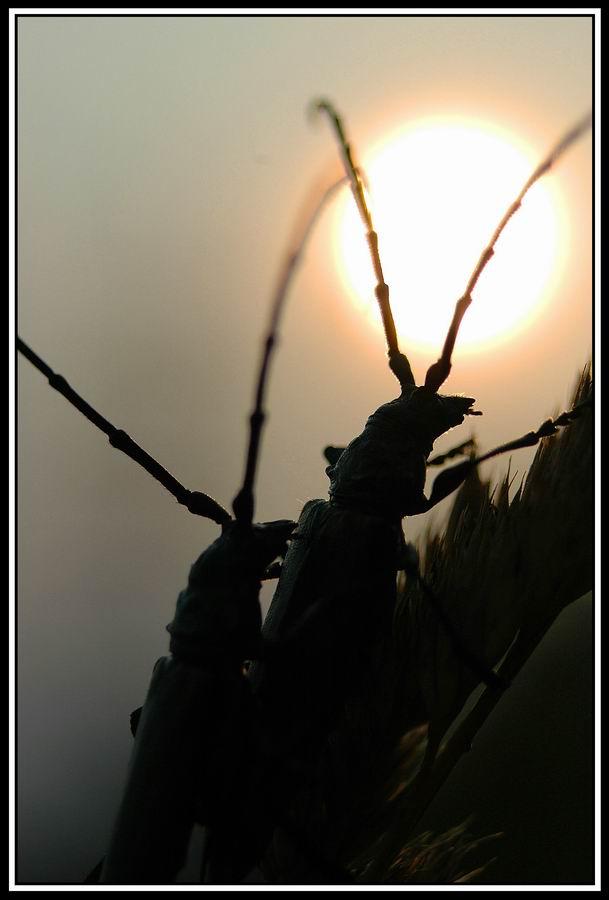 """фото """"Свет далекой звезды"""" метки: природа, макро и крупный план, насекомое"""