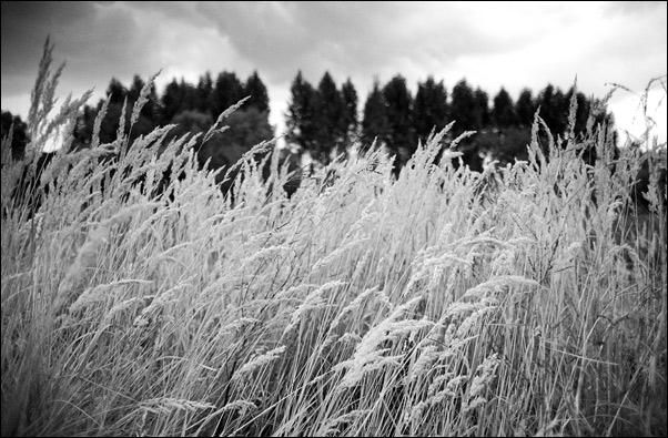 """фото """"Белое и черное"""" метки: пейзаж, лес"""