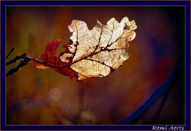 """фото """"last...."""" метки: природа, макро и крупный план, цветы"""