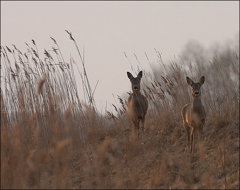 """фото """"Is it a gun or a canon :)"""" метки: природа, дикие животные"""
