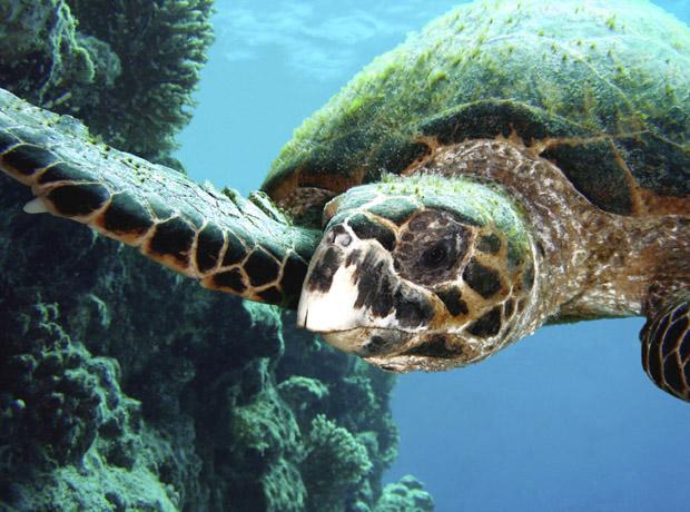 """фото """"Панкша"""" метки: подводные,"""