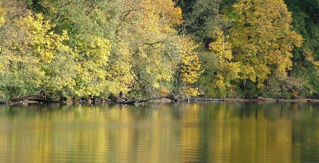 "фото ""Fall on Lacamas Lake"" метки: пейзаж, природа, осень, цветы"