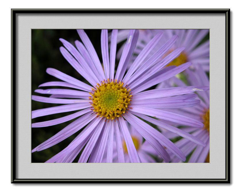 "фото ""natural splendour"" метки: природа, цветы"