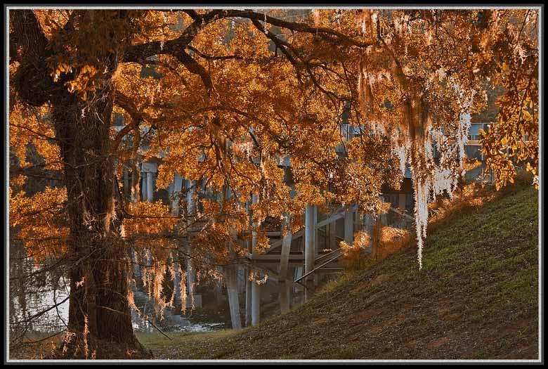 """фото """"great oaks grow from little acorns"""" метки: разное,"""