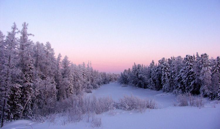 "фото ""Старица"" метки: пейзаж, зима, лес"