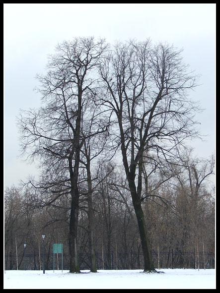 """фото """"Он и Она"""" метки: пейзаж, зима"""