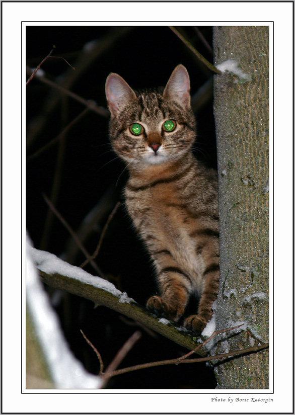 """фото """"Два зеленых глаза в ночи"""" метки: природа, дикие животные, домашние животные"""
