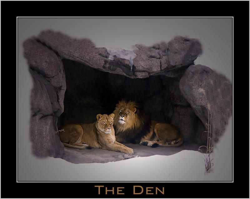 "фото ""The Den"" метки: природа, дикие животные"