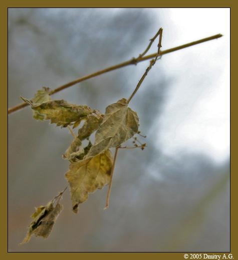 """фото """"Зимнее Настроение"""" метки: макро и крупный план, природа, цветы"""