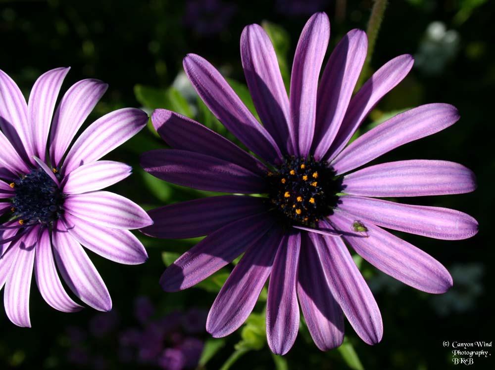 "фото ""Shadows and Light with a little friend !"" метки: макро и крупный план, природа, цветы"