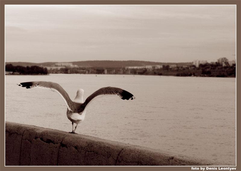 """фото """"Ready! Steady! Go!"""" метки: природа, черно-белые, дикие животные"""