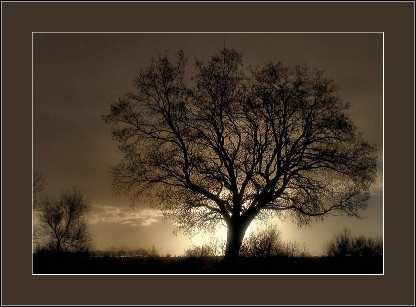 """фото """"силуэты #1:  симфония в сепии"""" метки: пейзаж, природа,"""