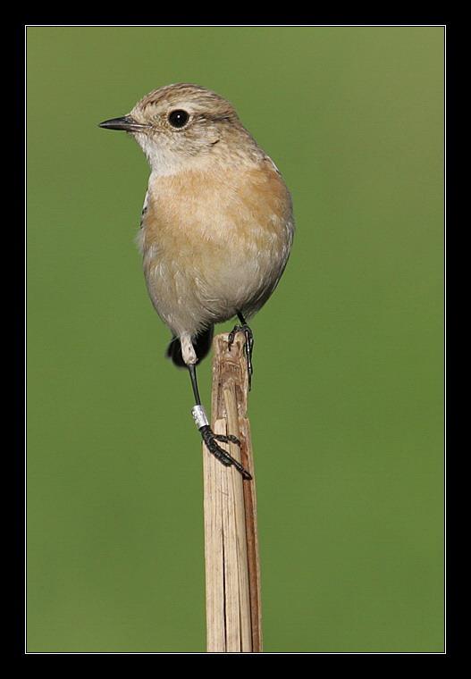 "photo ""The Ringed Bird"" tags: nature, genre, wild animals"