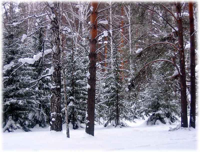 """фото """"В лесу"""" метки: пейзаж, зима, лес"""
