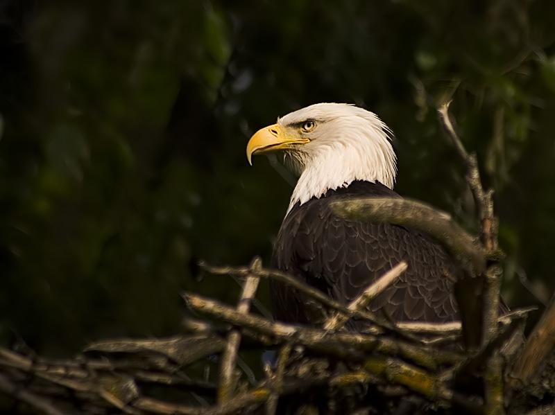 """фото """"f r e e d o m"""" метки: природа, дикие животные"""