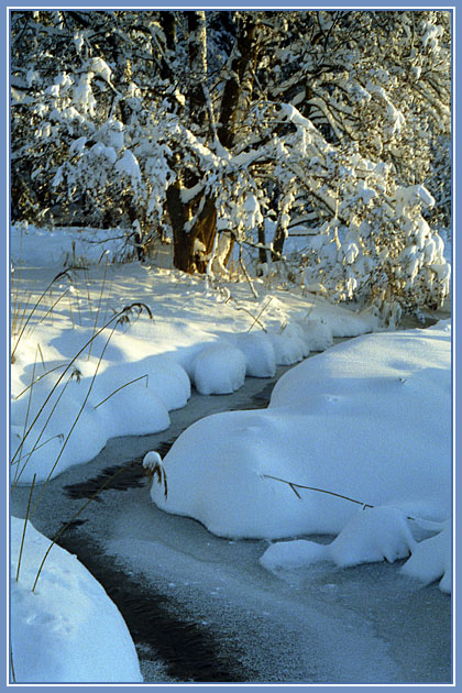 """фото """"Зимний этюд"""" метки: пейзаж, зима"""